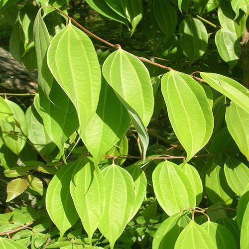 Natural and Organic Plants