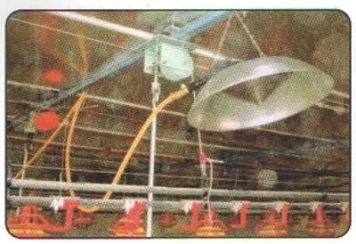 Poultry Farm Crane Accessories