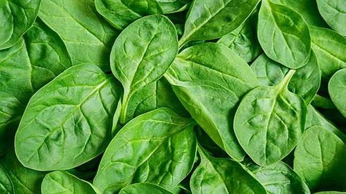 Fresh Cut Spinach