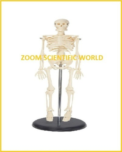 Mini Human Skeleton