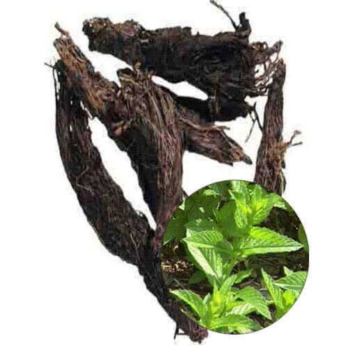 Nardostachys Jatamansi Root