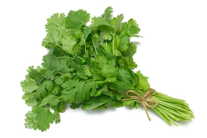 Fresh Cut Coriander