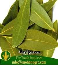 Bay Leaves / Bay Leaf