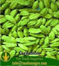 Cardamom Large / Small