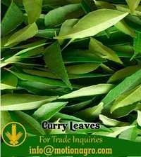 Curry Leaves / Curry