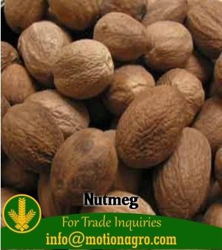 Nutmeg / Myristica Fragrans