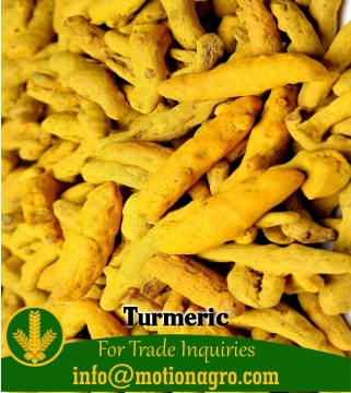 Turmeric / Curcuma Longa / Curcuma