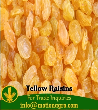 Yellow Raisins / Kismiss