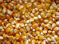 Yellow Corn Seeds