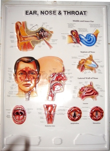 Medical Posters