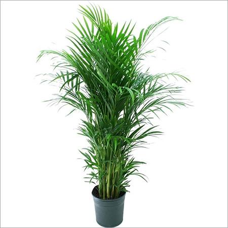 Areca Plant Care Services