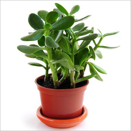 Jade Planting Services