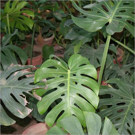 Monesteria Plant Care Services