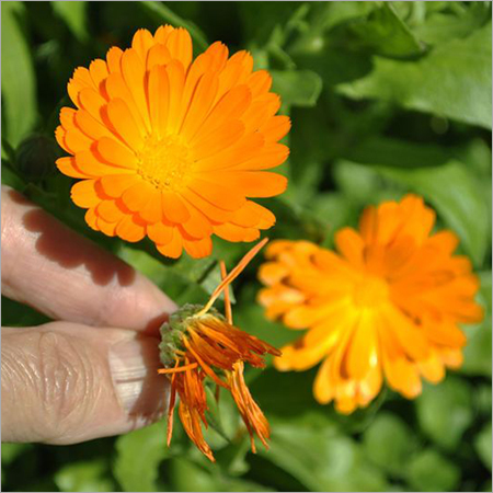 Calendula Landscaping Services