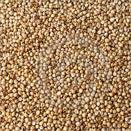 Sorghum and its Varieties