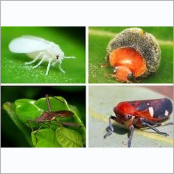 Diafenthiuron Insecticide