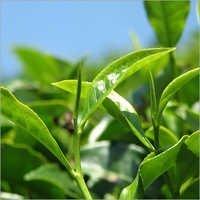 Flubendiamide Insecticide