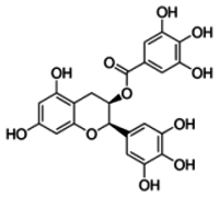 Epicatechin gallate solution