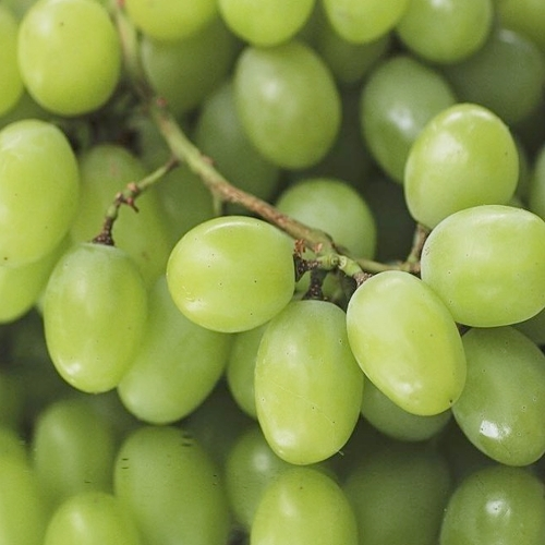 Fresh Grapes Fruits