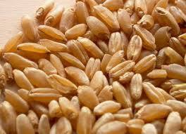 Malawraj Wheat