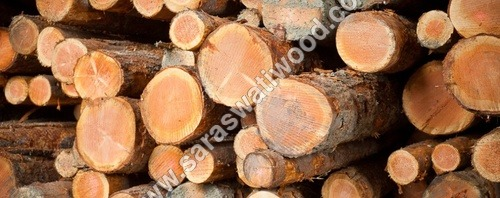 Canadian Pine Timber