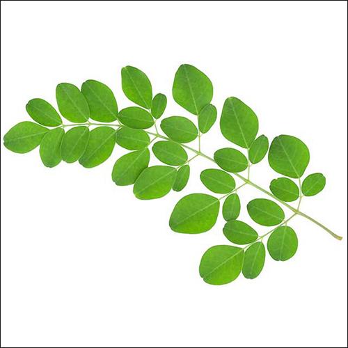 Herbs and Medicinal Plants