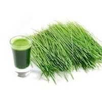 Wheat Grass Extract Hair Oil