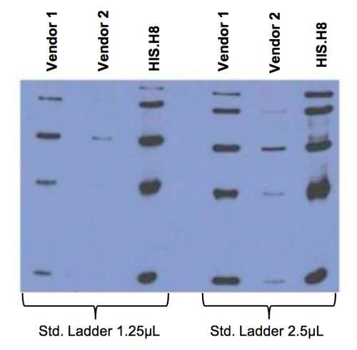 Anti-His Tag (HIS.H8) Monoclonal Antibody 100 gr