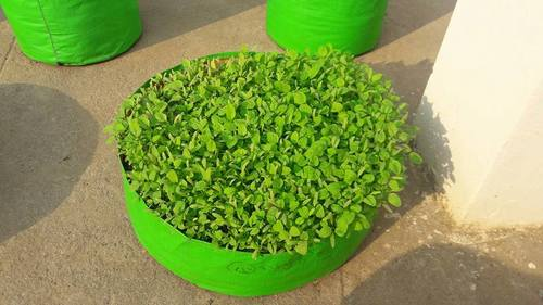HDPE Round Grow Bags