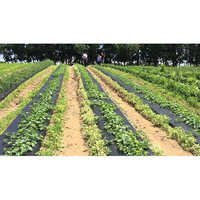 Mulch Film For Agricultural Farms