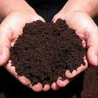Premium Organic Compost