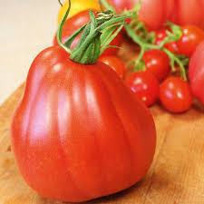 f1 tomato seeds