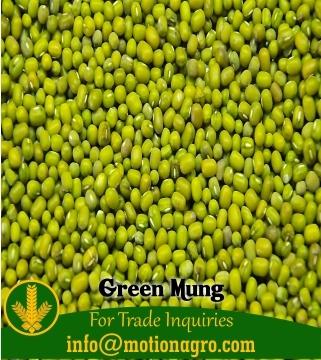 GREEN MUNG / GREEN GRAM