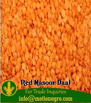 Red Masoor Dal / Red Lentils