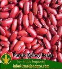 Purple Kidney Beans