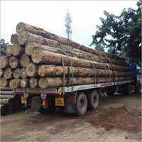 Pine Wood Round Logs