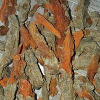 Mother Turmeric Rhizomes