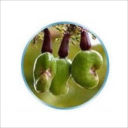 Ogbomosho Raw Cashew Nut