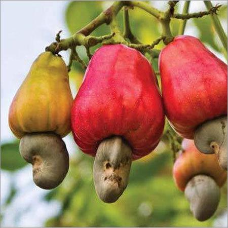 Tanzania Raw Cashew Nut