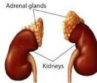 KIDNEY AND ADRENAL GROUND