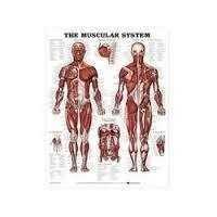 Charts,Human Physiology