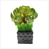 Bonsai Succulent Arrangement in Ceramic Vase