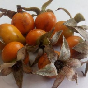 Rosehip Extract Granules