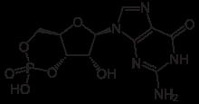 Guanosine 3′:5′-cyclic monophosphate