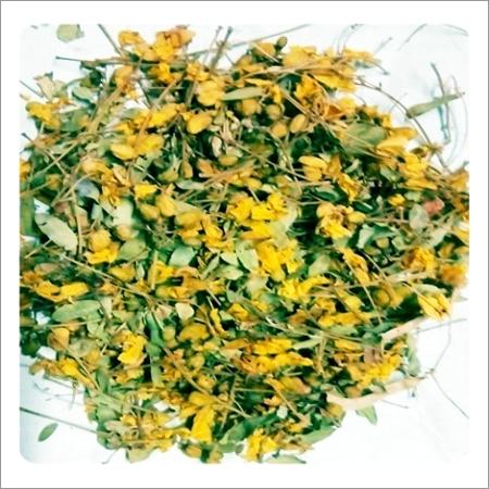 Cassia Auriculata - Avaram