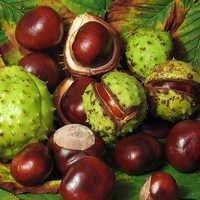 Horse Chestnut Oil