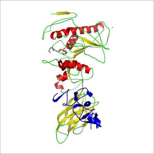 Enzyme Lipase