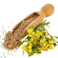 Wild Mustard Oil