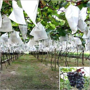 Grapes Non Woven Cover