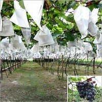 Grapes Non Woven Cover